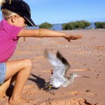 A young Claudia Curran releasing a Bar-tailed Godwit